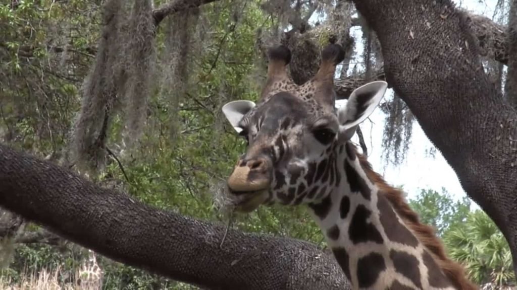 animals you see while riding Kilimanjaro Safari